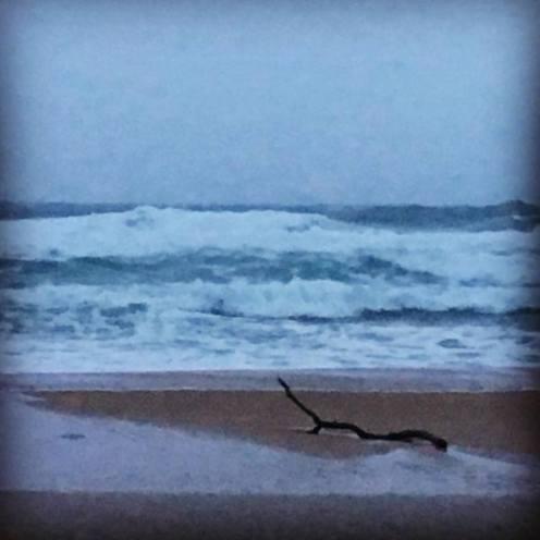 wild ocean2